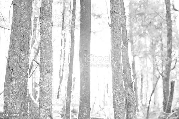 Wilderness Stock Photo - Download Image Now
