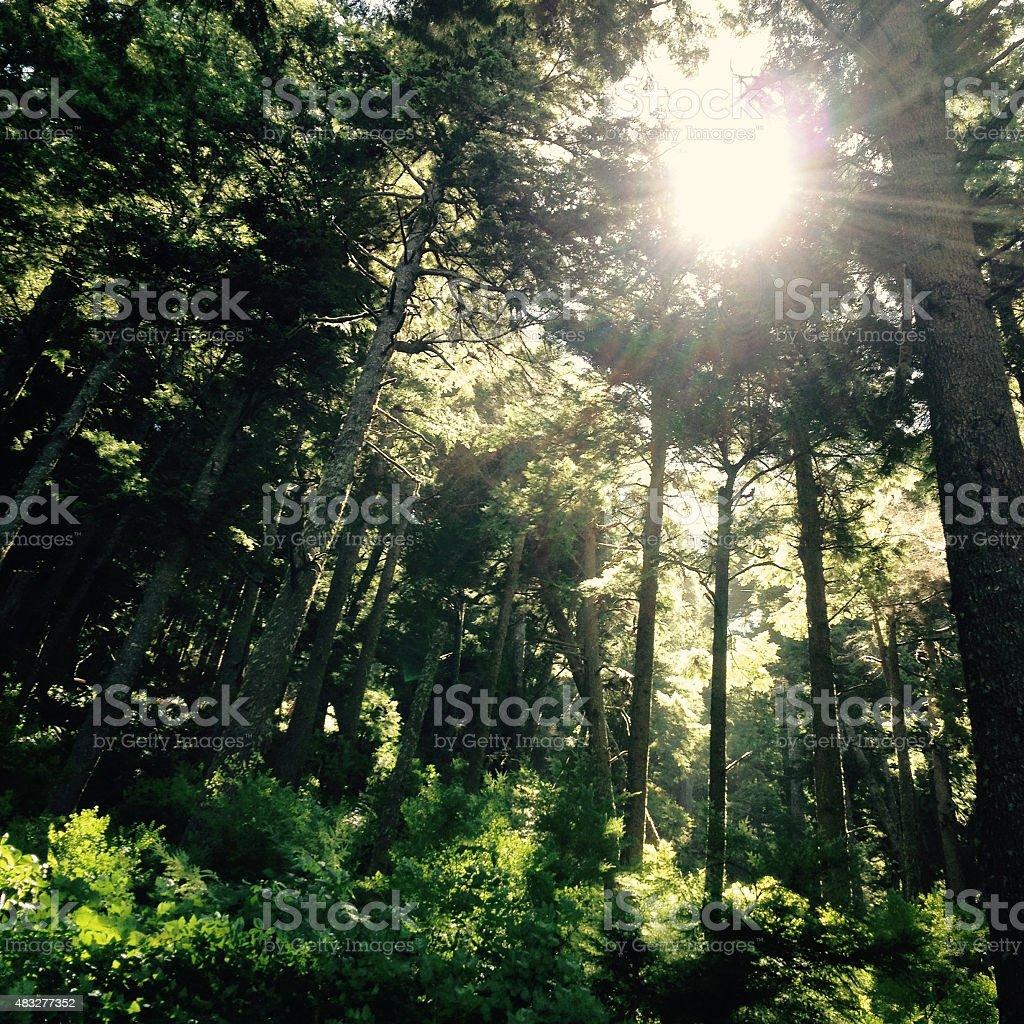 Wilderness - Royalty-free 2015 Stock Photo