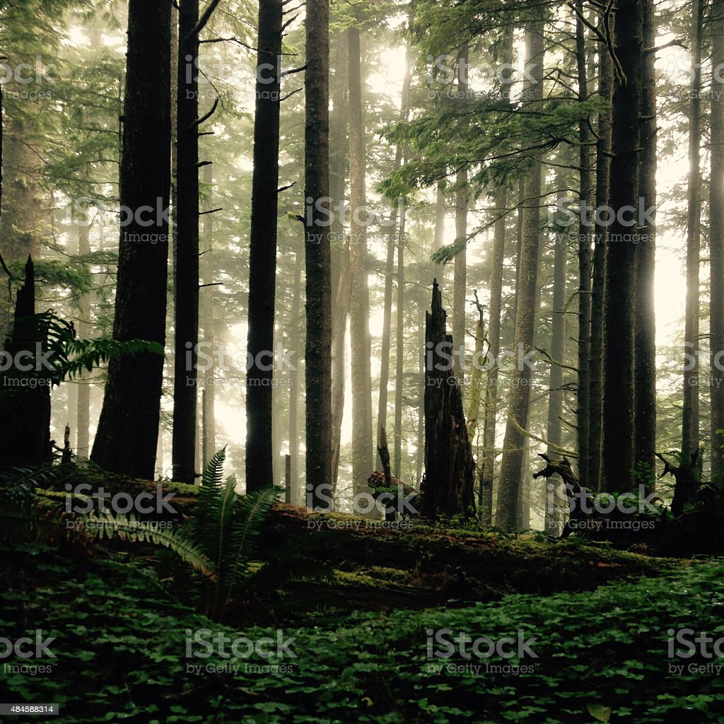 Wilderness - Royalty-free 2015 Stock Photo