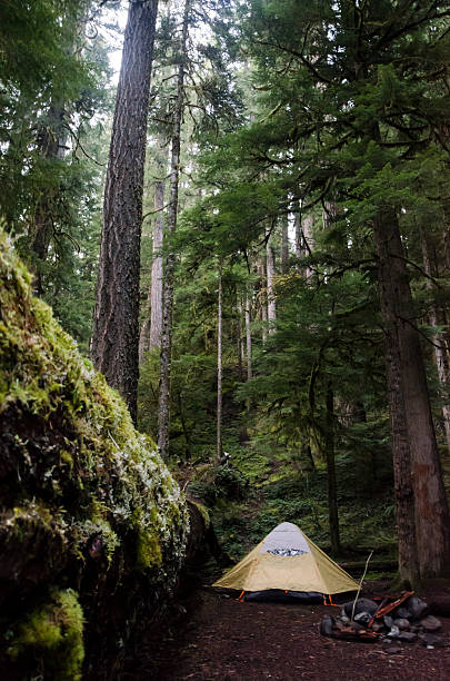Wilderness Tent stock photo