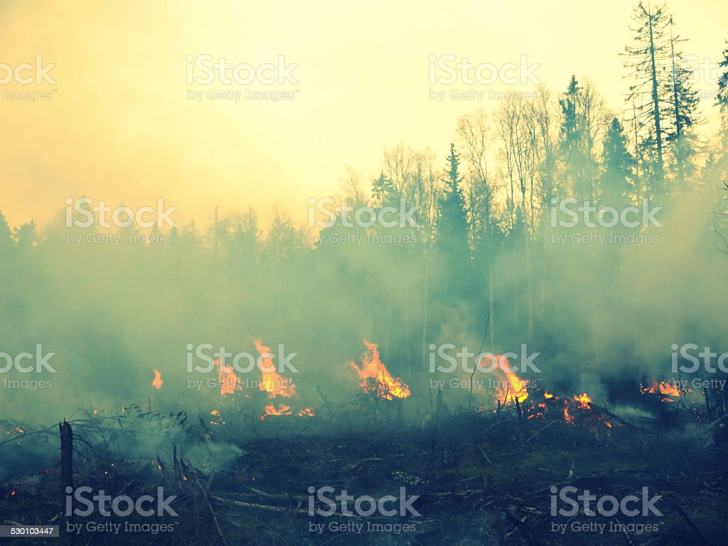 wildfire 010 stock photo