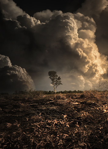 Wildfire and deforestation in Thailand. Global warming and natural disaster concept background.