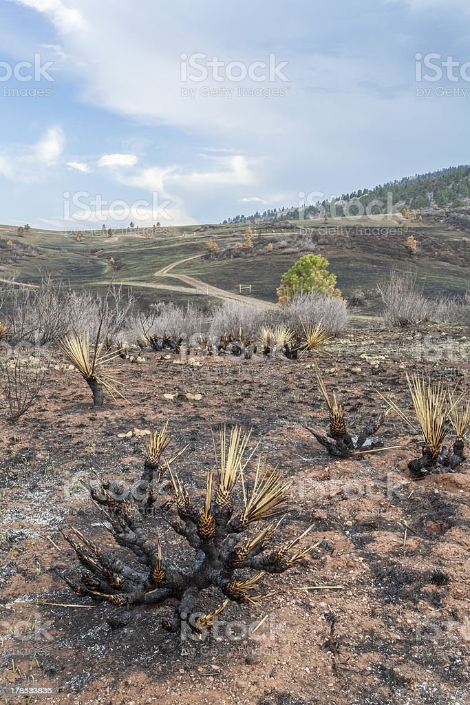 wildfire burnt landscape royalty-free stock photo