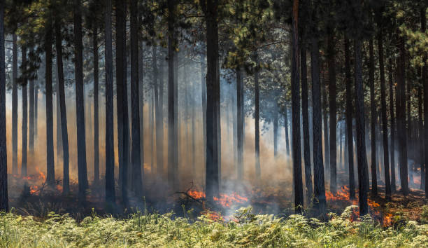 Wildfire, fire in a forest. stock photo