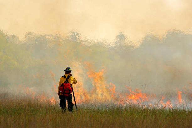 Wildfire in Everglades, grass in flame and fume. fireman with flame in the wild nature. fire fighter working with wildfire. Wildlife scene from nature. Forest in big fire in February, Florida, USA stock photo