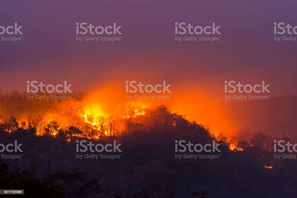 Wildfire in Ubon Ratchathani, Thailand stock photo