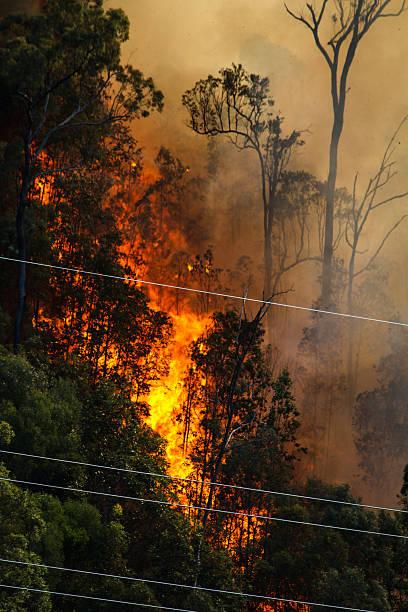 Wildfire near power lines stock photo