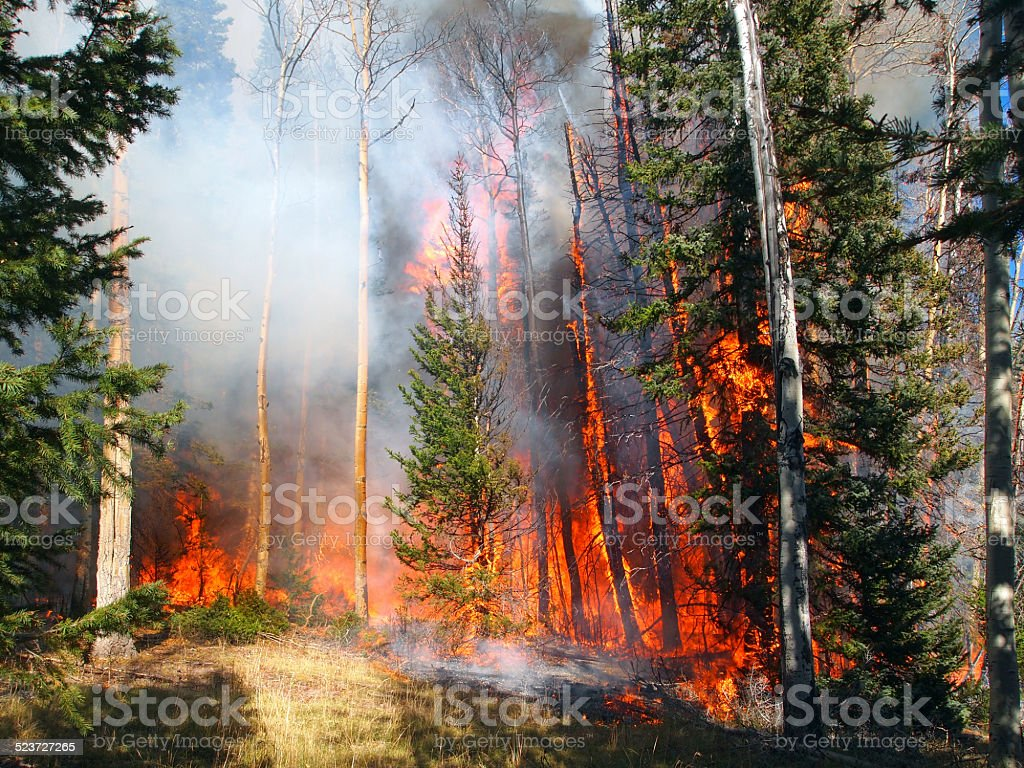 Wildfire stock photo