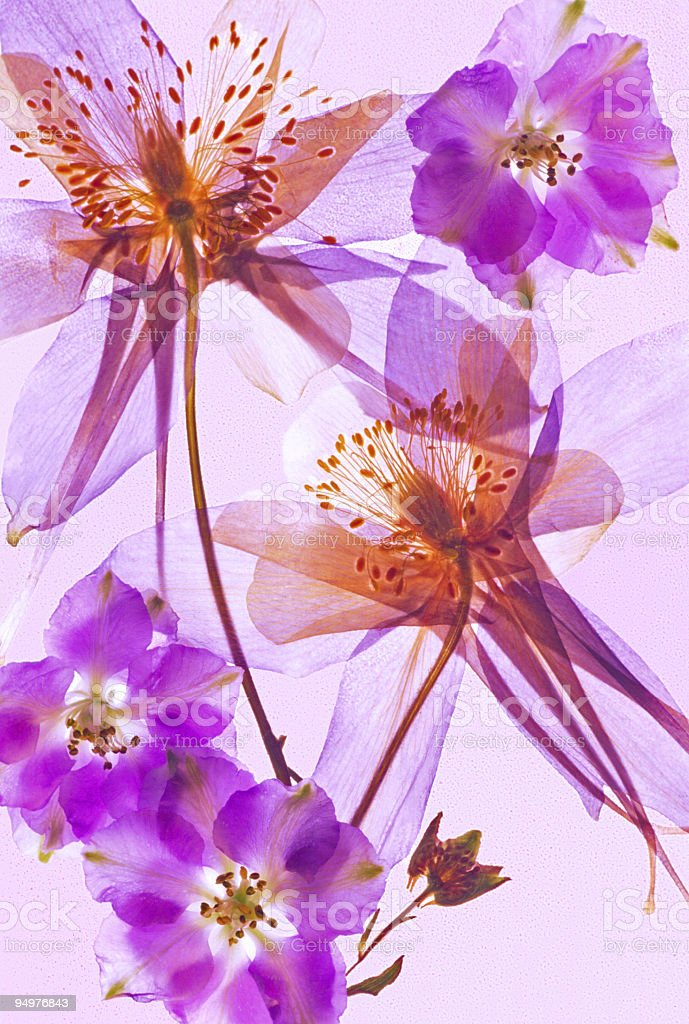 Wildflower Abstract royalty-free stock photo
