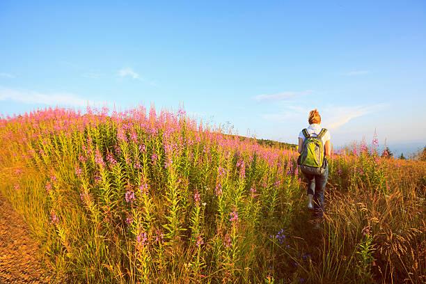 fleurs sauvages prairie alpin milieu adulte femme randonneur paysage de montagne - paysage mois de mars photos et images de collection