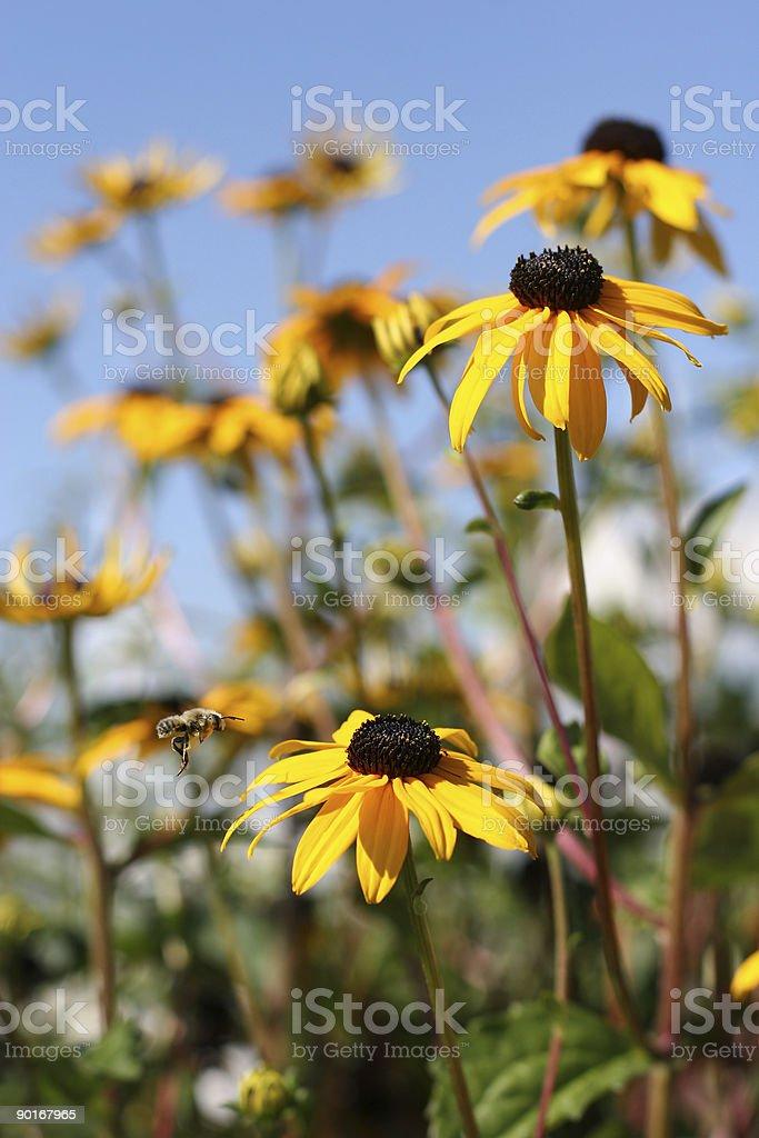 Wildflower bee stock photo