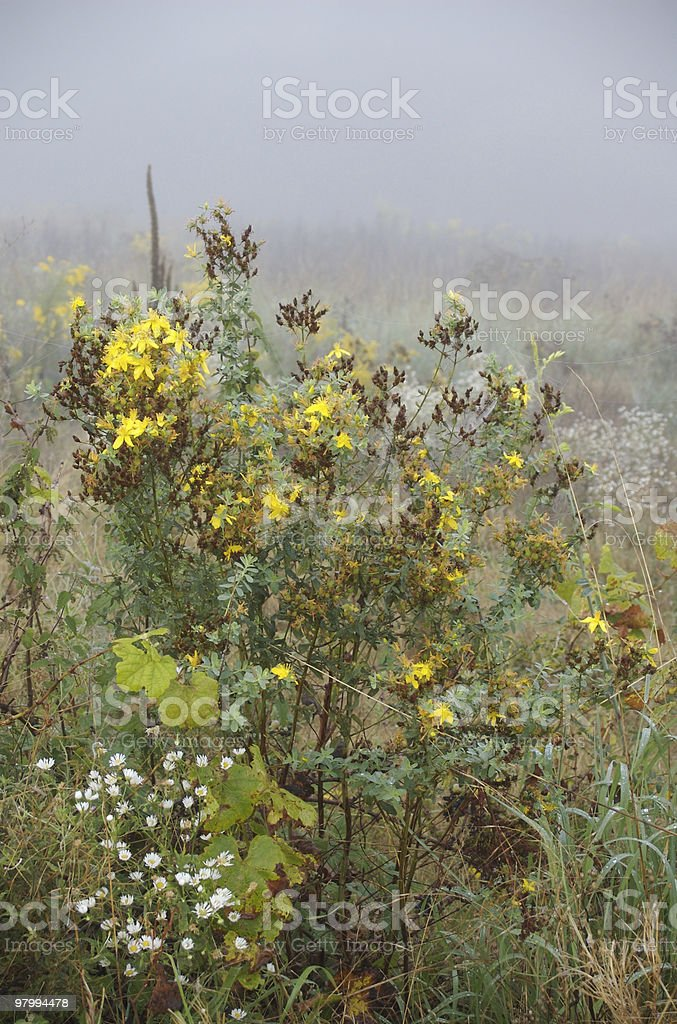 Wildflower bush in the fog royalty free stockfoto