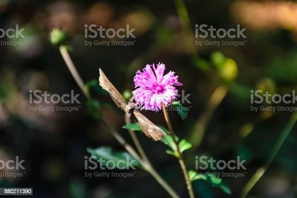 Wildflower butterfly picture id880211390?b=1&k=6&m=880211390&s=612x612&h=w11yrowvvnzrbqrfgj1cxmeznbcuahk4rby65afwb1g=