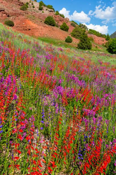 Wildflower Combo stock photo