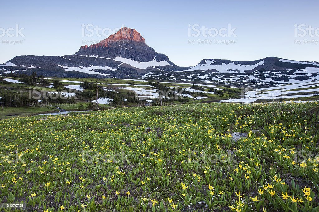 wildflower field at Logan Pass, Glacier National Park stock photo