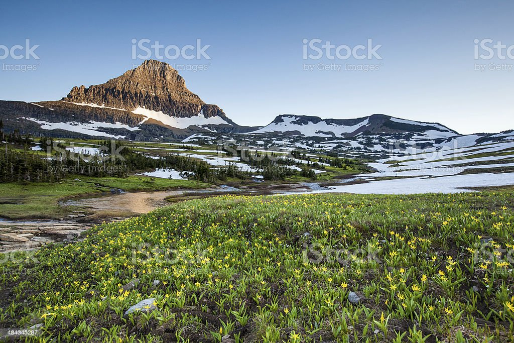 wildflower field, Glacier National Park stock photo
