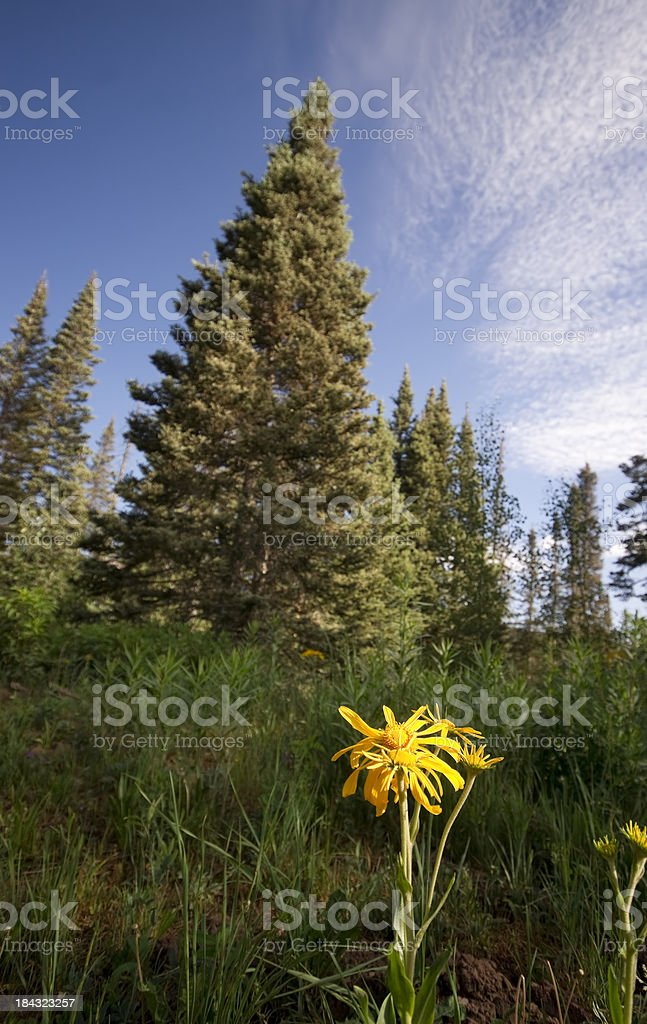 wildflower forest landscape royalty-free stock photo