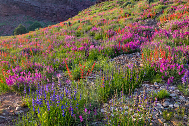 Wildflower Hill stock photo