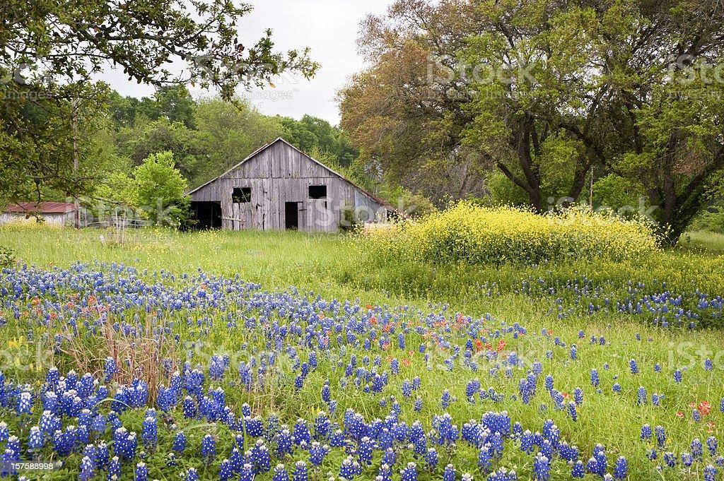 Wildflower landscape stock photo