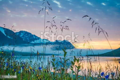 istock Wildflower meadow at sea and mountains in Norway 1133232488