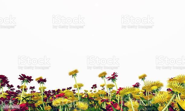 Wildflower meadow isolated on white background picture id525476432?b=1&k=6&m=525476432&s=612x612&h=zr1gk xmdvxftqe6udkloyyr9zn okiz8tzw qil zu=