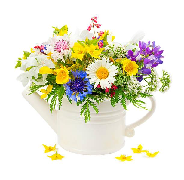 Wildflower picture id500689527?b=1&k=6&m=500689527&s=612x612&w=0&h=b n5uz1fxu9t4w2d9v2opayr5izii2x3m o96p1cp s=