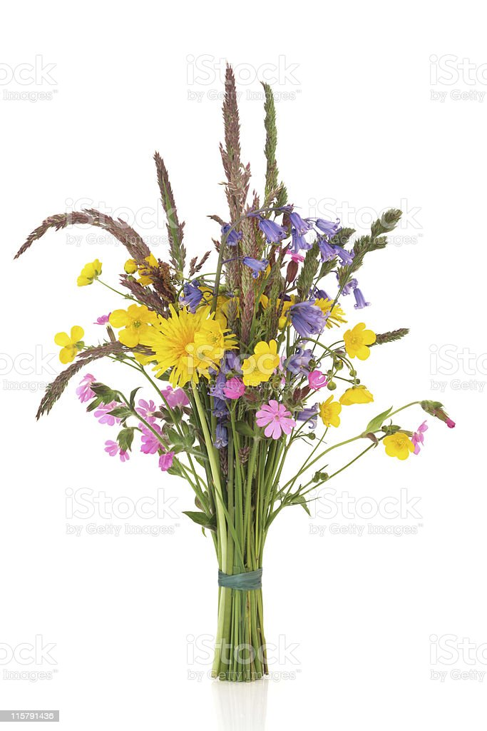 Photo de stock de petit bouquet de fleurs sauvages images libres de droit et plus d 39 images de - Bouquet de fleurs sauvages ...