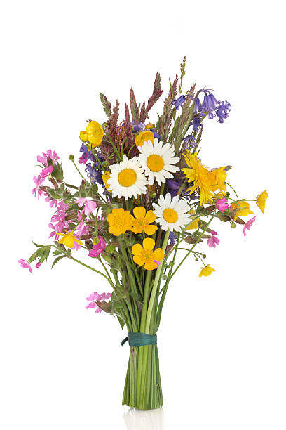 wildflower posy - bouquet stock photos and pictures