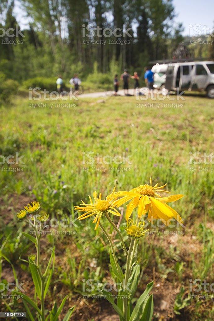 wildflower recreation royalty-free stock photo