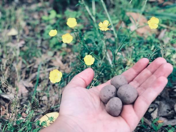 Wildflower seed bombs picture id1143346464?b=1&k=6&m=1143346464&s=612x612&w=0&h=5f r7ii dnkpmmv6eswrfymhuloz6xrtngak4w987us=