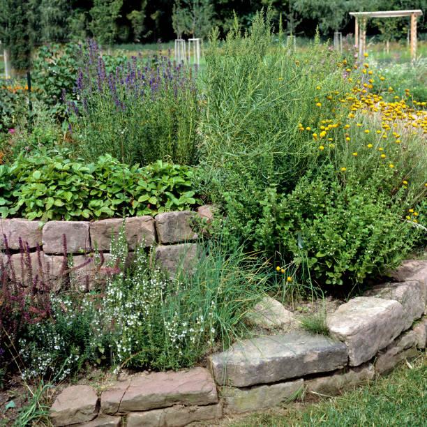Wildblumen; Gewürz, Pflanze, aromatischen Pflanzen; Kräuter – Foto