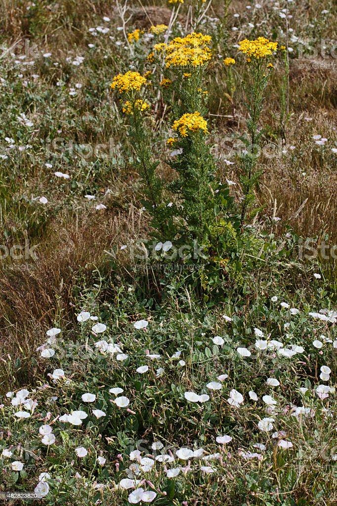 Wildflower summer meadow Mitcham Common stock photo