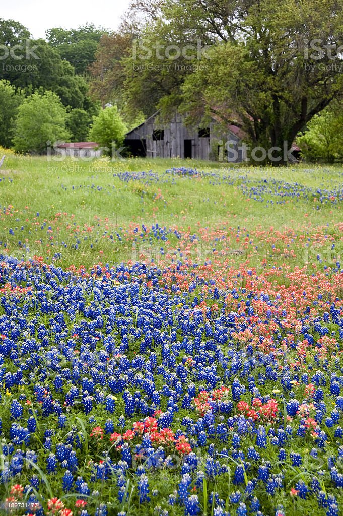 Wildflower vertical royalty-free stock photo