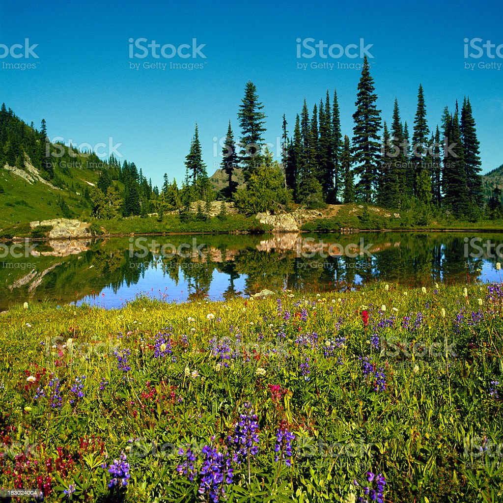 Wildflowers and Alpine Lake, Mount Rainier, Washington royalty-free stock photo