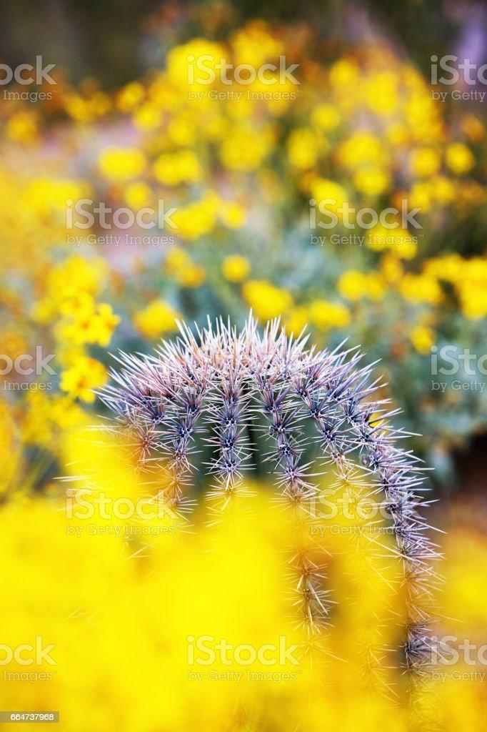 Wildflowers and Barrel Cactus in Arizona Desert stock photo