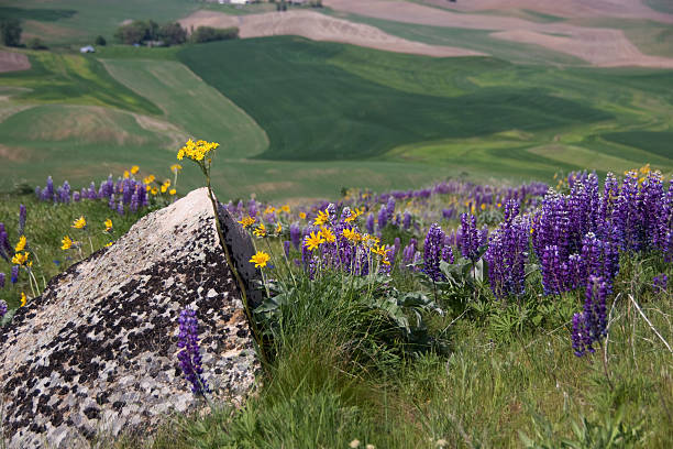 wildflowers and fields - spring stock photos and pictures
