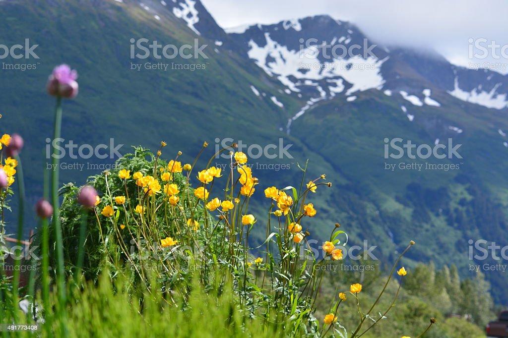 Wildflowers and Foggy Alaskan Mountains stock photo