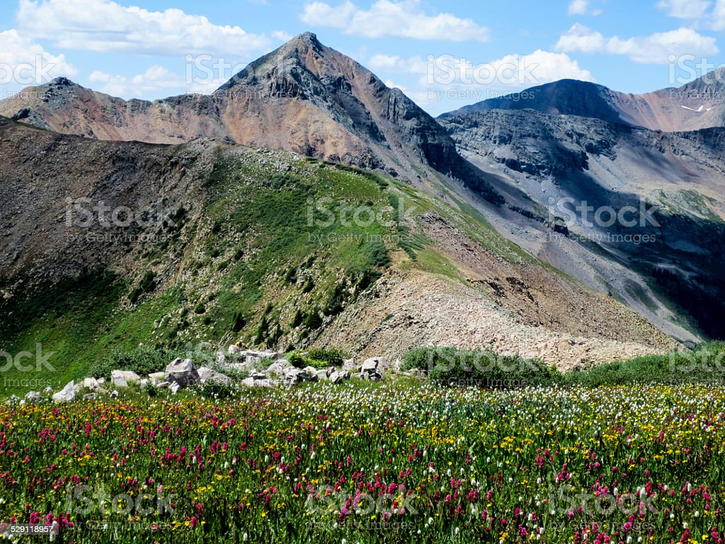 Wildflowers and mountain peaks in the Rocky Mountains stock photo