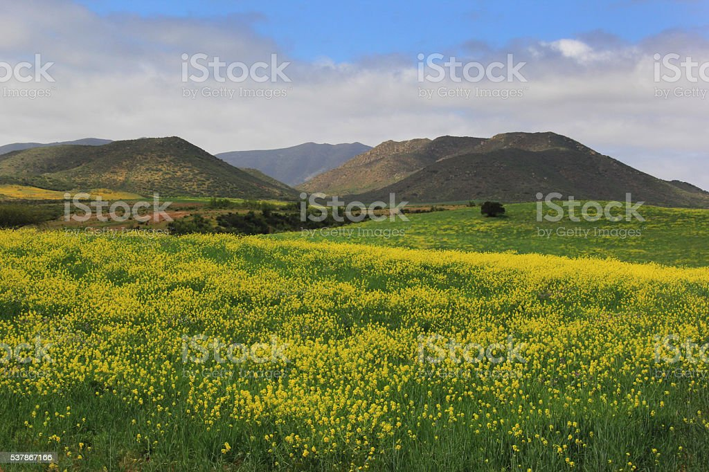 Wildflowers and Mountains stock photo