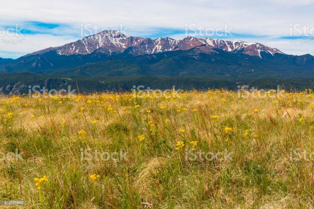 Wildflowers and Pikes Peak stock photo