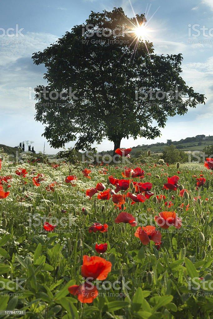 Wildflowers and sunshine royalty-free stock photo