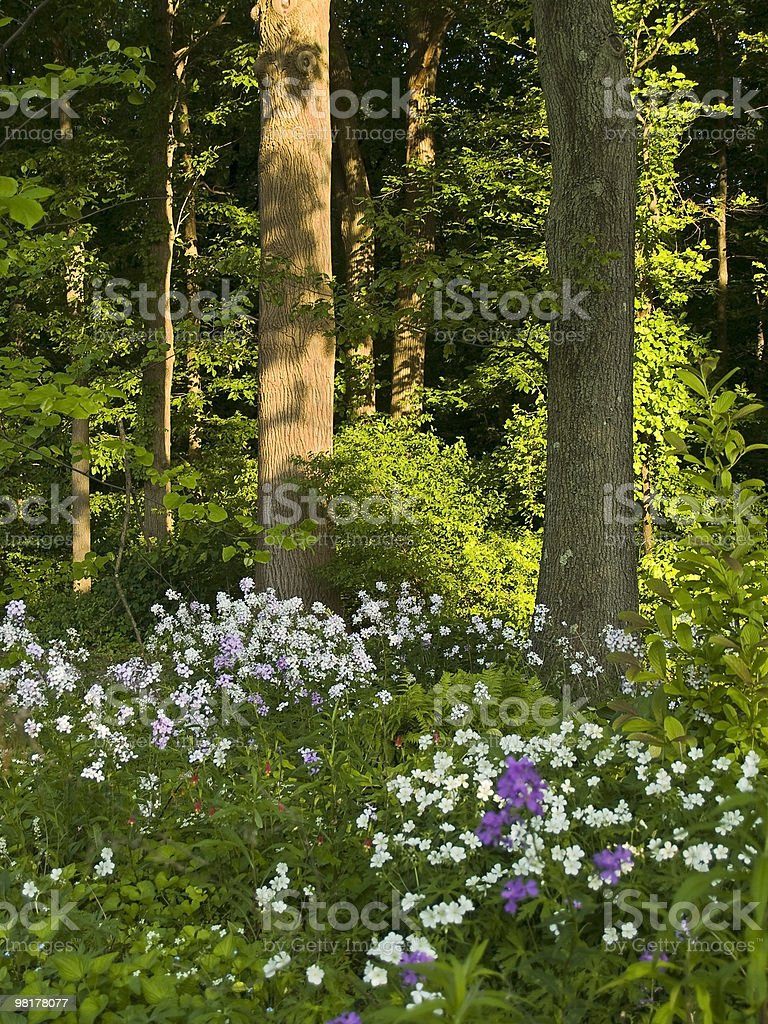 Wildflowers and Woods royalty-free stock photo