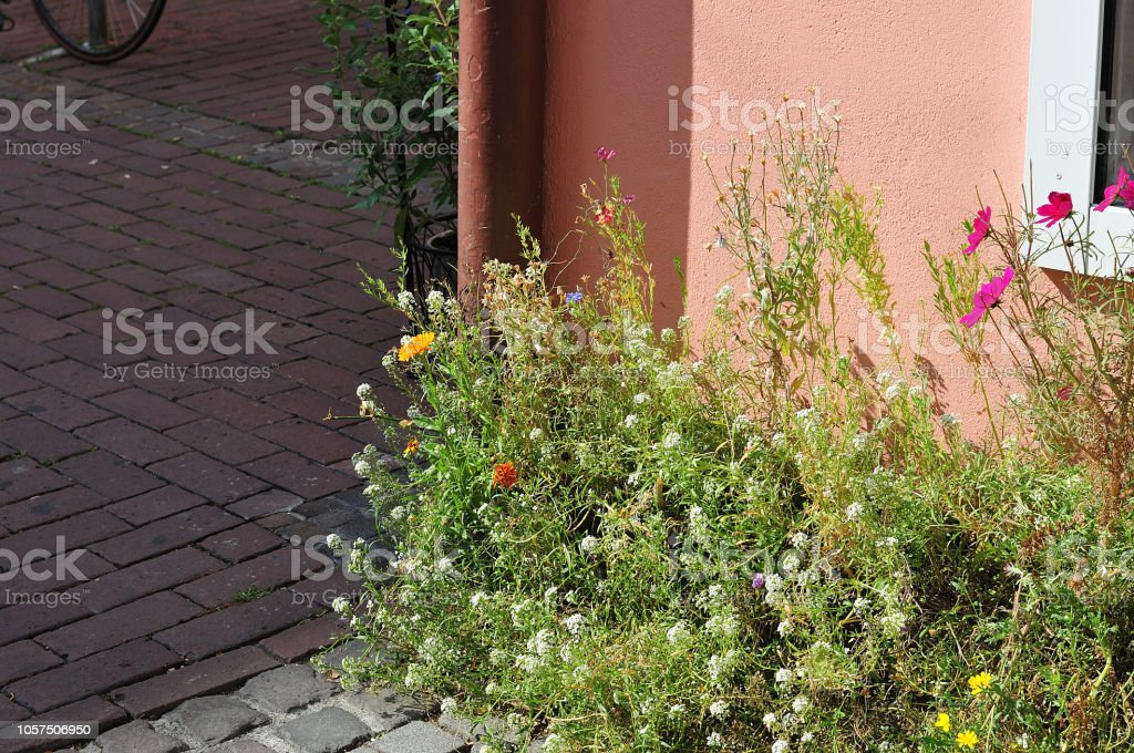 Wildblumen im Gebäude Fassade – Foto