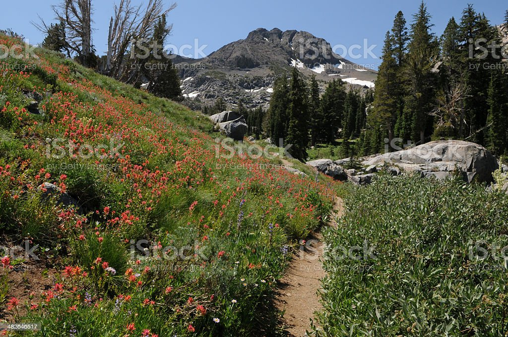 Wildflowers at Round Top royalty-free stock photo