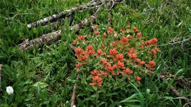 Wildflowers at Ruth Lake stock photo