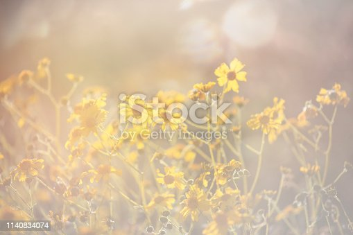 Horizontal hazy image of bright yellow wildflowers superbloom Arizona