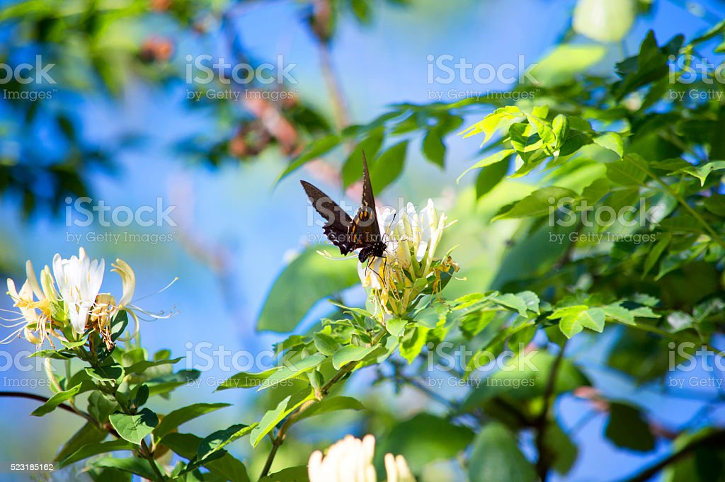 Wildflowers & Black Butterfly stock photo