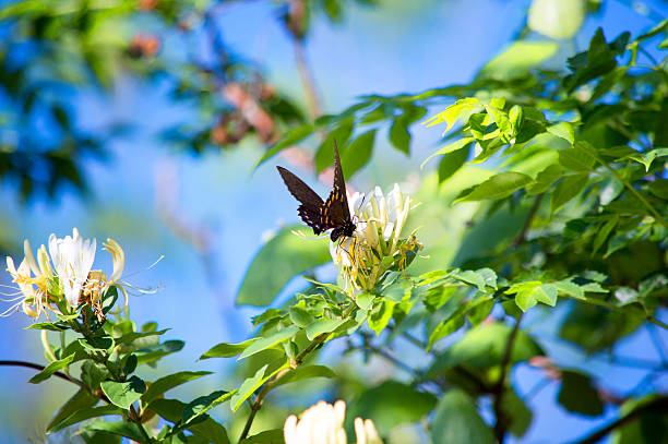 Wildflowers & Black Butterfly stock photo