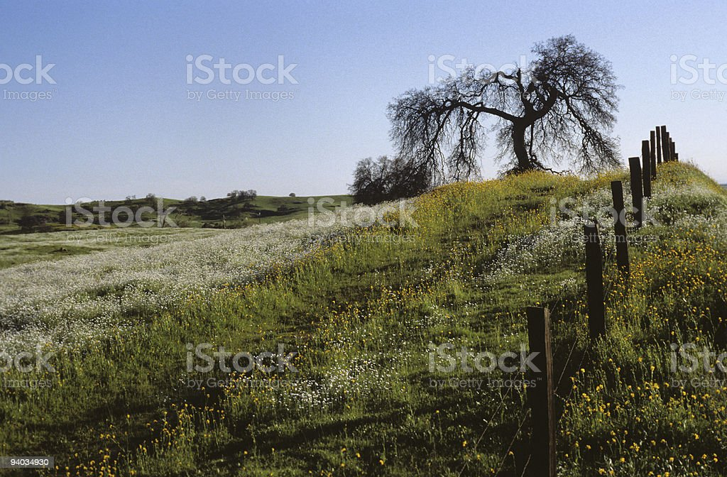 Wildflowers, Fence and Oak Tree royalty-free stock photo