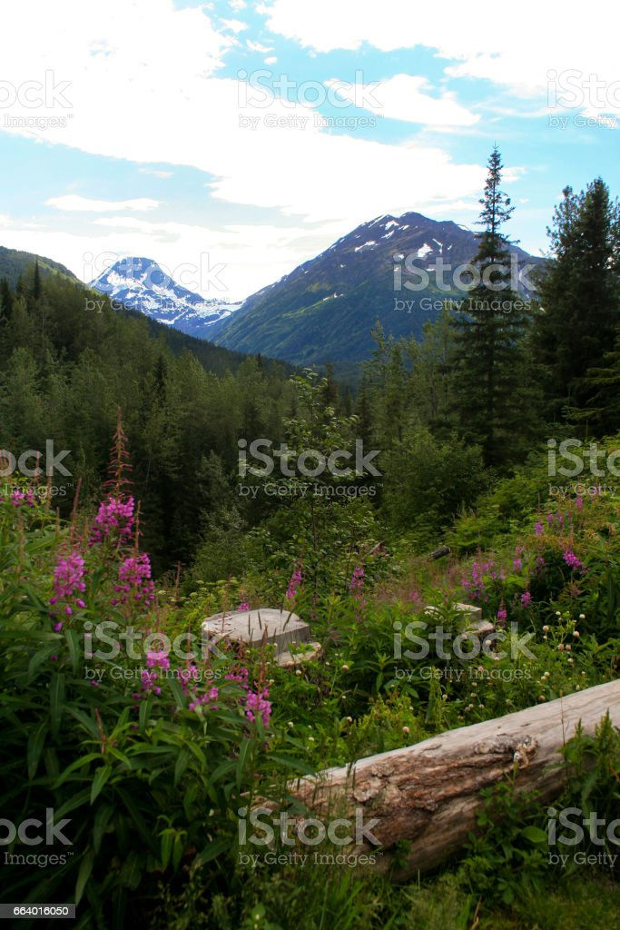 Wildflowers Growing in Scenic Alaskan Valley stock photo